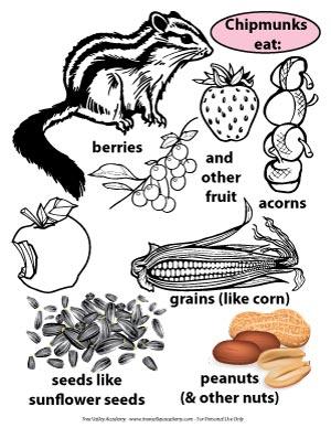 free colouring printable showing food chipmunks eat