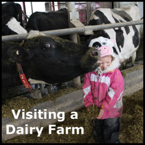 A field trip to a dairy farm.