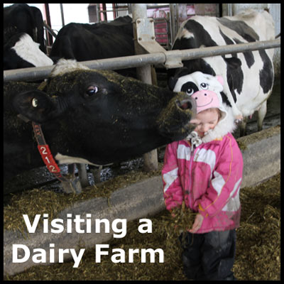 A field trip to a dairy farm.