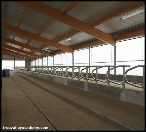 A new cow barn with automatic manure cleaner and cow separators.