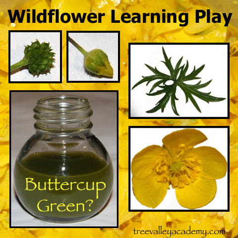 Learning about wildflowers through nature walks and wildflower exploration and play.