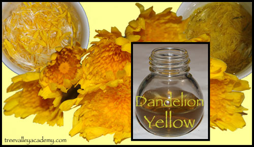 On the quest for the perfect natural dye. Experimenting what kind of yellow dye, we can make with Dandelion Yellow.